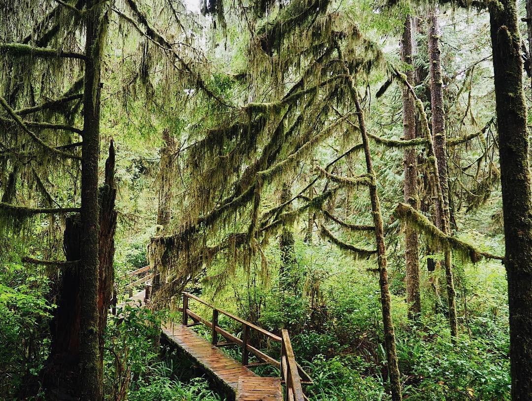 Camper Life - Vancouver Island